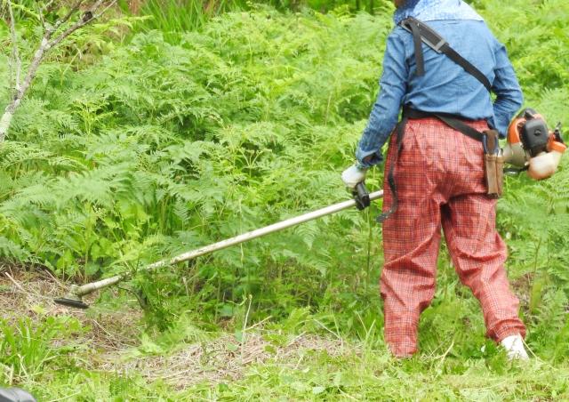 熊本市で草刈りにかかる料金相場は?追加料金や業者選びのコツまで解説