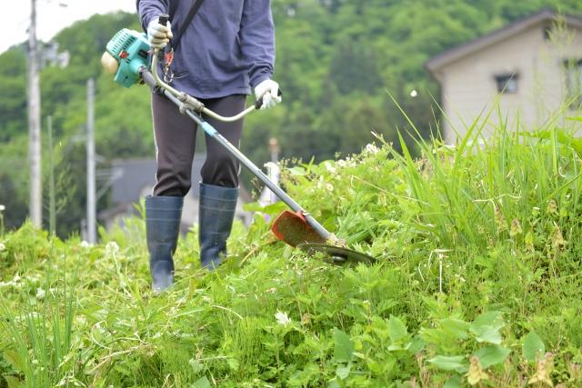 熊本市で草刈りに最適な年3回の時期~楽に草刈りを終えるコツまで徹底解説